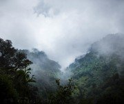 lagocloudforest